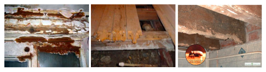 Wet rot, dry rot, beetle damage