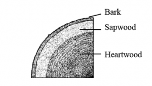 Cross section through a tree trunk
