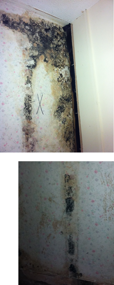 Photo of mould found behind insulation lining after about 30 years
